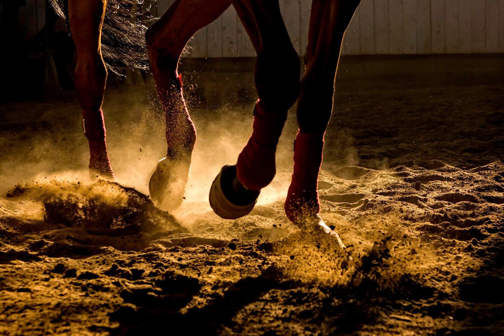 Paarden in het zand